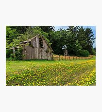 Windmill Flowers And A Barn Photographic Print