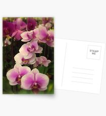 Purple Orchids for My Love Postcards