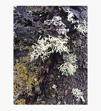 Wet Moss Photographic Print