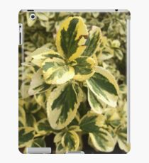 Green Washington leaves iPad Case/Skin