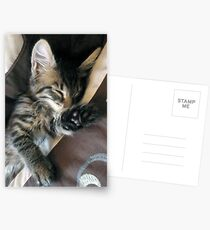 Talk to the paw, i'm sleeping! Postcards
