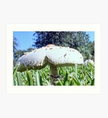 Mushroom In the Grass Art Print