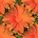 Orange Daisy by Judi FitzPatrick