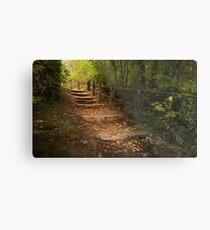 Autumn forest steps Metal Print