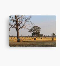 Rural Australia Canvas Print