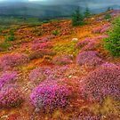 Wicklow Mountains Heather by DES PALMER