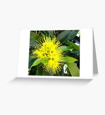 Golden Panda Australian Native Plant. Greeting Card