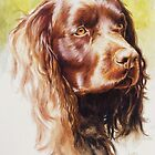 American Water Spaniel by BarbBarcikKeith