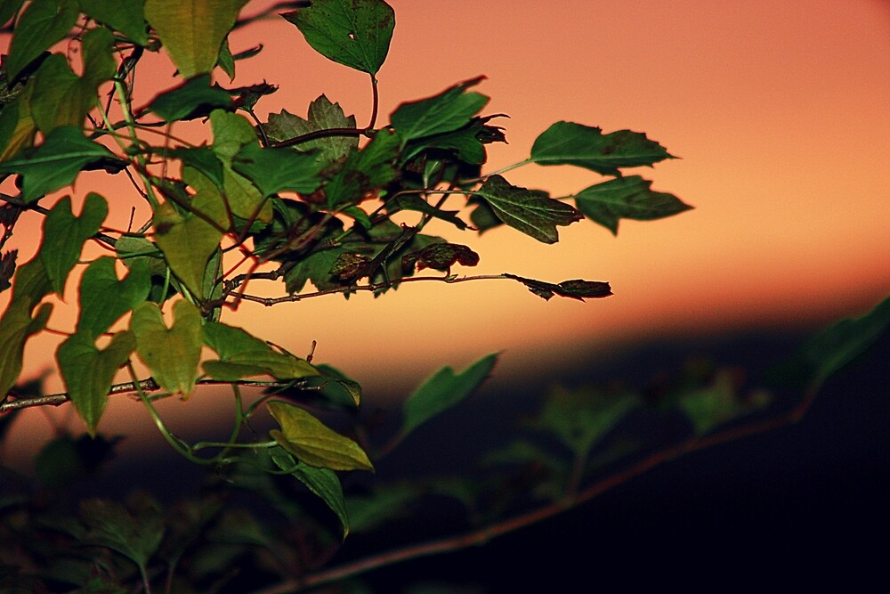 Sunset through the leaves by franceslewis