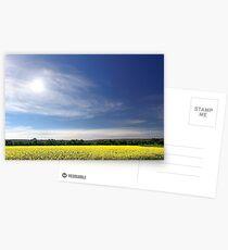 Sun Halo Over Canola Field Postcards