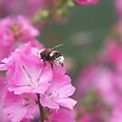 Bee on mallow by Agnes McGuinness