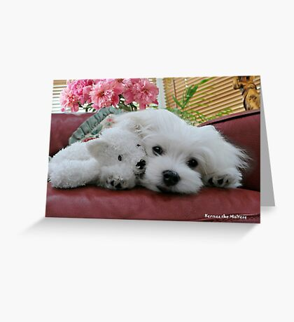 Hermes the Maltese & Titch Greeting Card