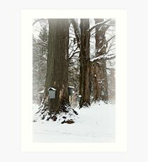 Maple Sugaring Time Art Print