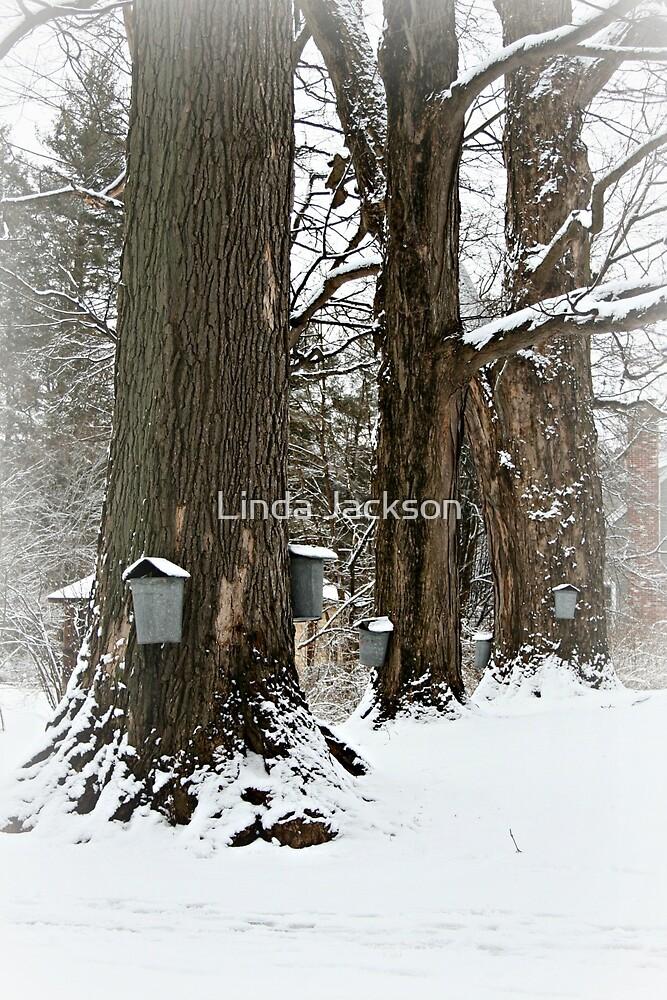 Maple Sugaring Time by Linda Jackson