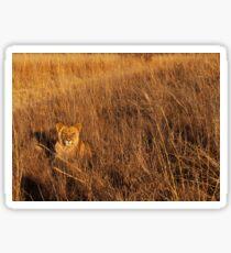 Lioness Print Sticker