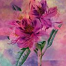 RHODODENDRON by Tammera