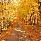 Autumn Gold  by lorilee