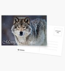 Timber Wolf Christmas Card - English - 20 Postcards