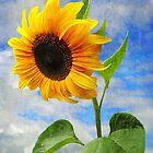 Sunflower by Christine Lake
