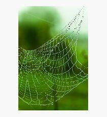 water web Photographic Print