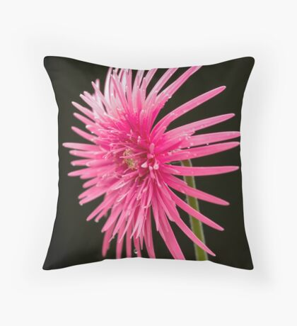 Life of  a Beauty Throw Pillow