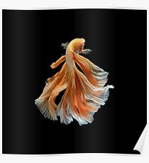 Beautiful Siamese Fighting Fish Poster