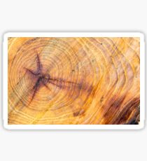 Cut down a tree with annual rings Sticker