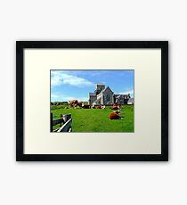 Iona Abbey, with cows Framed Print