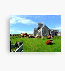 Iona Abbey, with cows Canvas Print