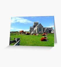 Iona Abbey, with cows Greeting Card