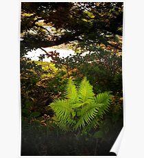 Woodland Fern Poster