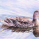 Canada Duck by whiterabbitart