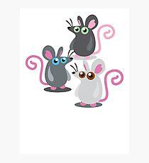 Three rat THE RAT PACK! Photographic Print
