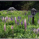 Luna on Birdhouse in Lupines by Wayne King