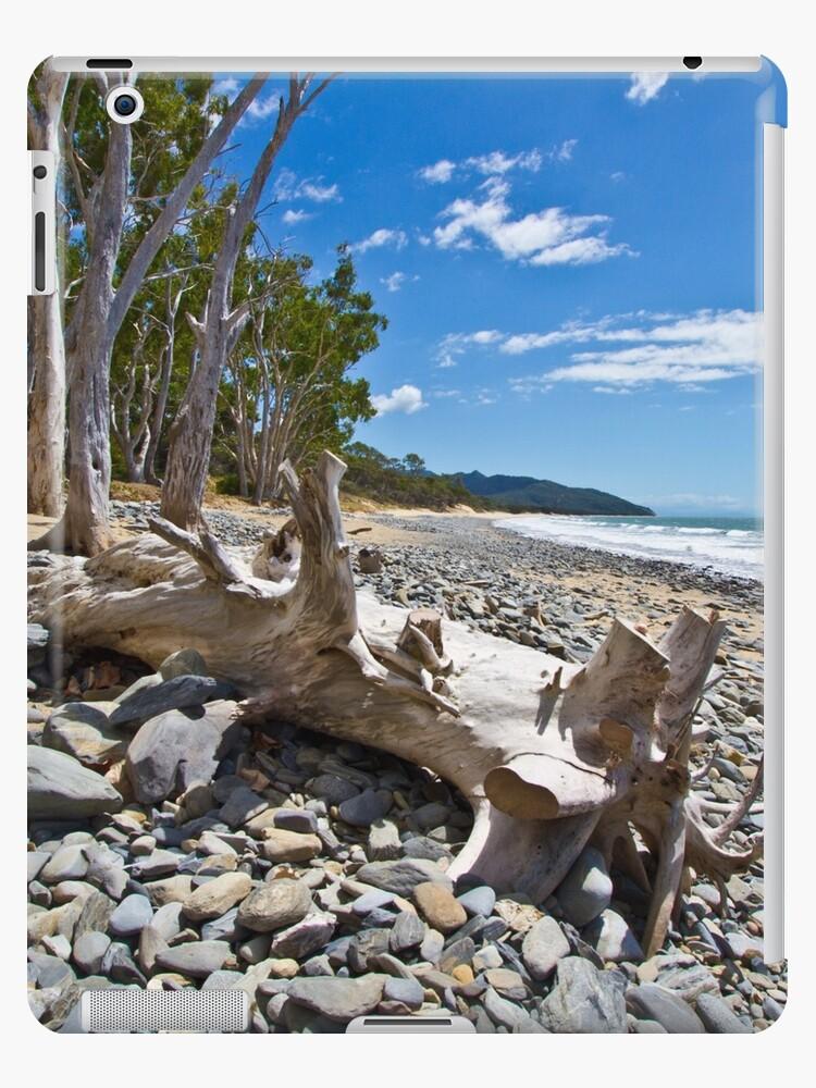 Drift Wood by Ian Fraser
