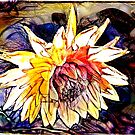 The Abstracted Dahlia  by PictureNZ