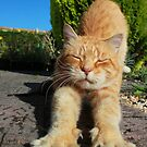 Ginger cat stretching on garden path by turniptowers