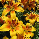 March of the Lilies von BlueMoonRose