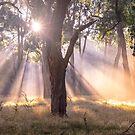 Light Streaming through trees by Steven  Sandner