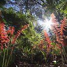 Young ferns in spring light by Steven  Sandner