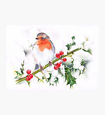 Winter Robin and Holy  Photographic Print