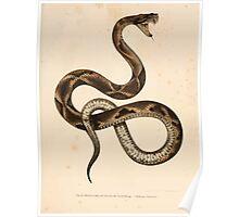 Leopold Joseph Fitzinger 1867 0157 Picture Atlas for popular scientific natural history of vertebrates Poster