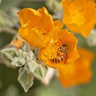 Honey Bee With Yellow Orange Flowers by K D Graves Photography