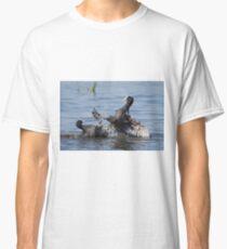 Eurasian Coot birds (Fulica atra) fighting for territory Classic T-Shirt