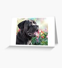 Cane Corso Painting  Greeting Card