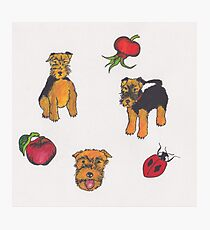 Three Welsh Terriers with Red Photographic Print
