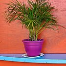 plant in purple pot by David Chesluk