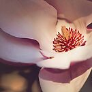Magnolia Love by Jo Williams
