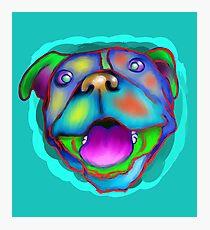 acrylic happy pit bull Photographic Print