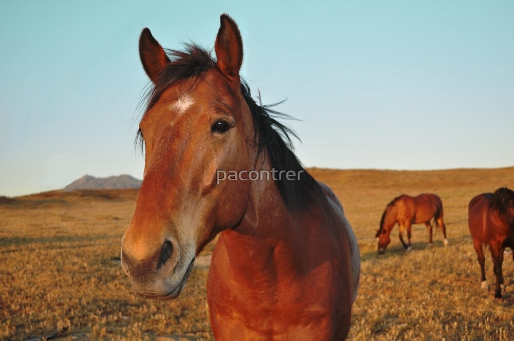 Horses in a Field by Paula Contreras